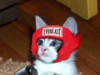 catboxing.jpg
